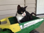Cat in a Truck - by Emily