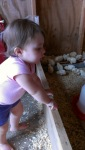 Sophie watching the little chicks - by Paula