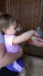 Sophie at the chicken coop - by Paula