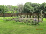 First-time backyard vegetable garden - by Judy