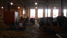 Packing up in the Cattle Barn - by Claire G.