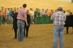 Will B. showing his heifer - by Katie M.