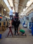 Getting horse ready for competition - by Molly S.